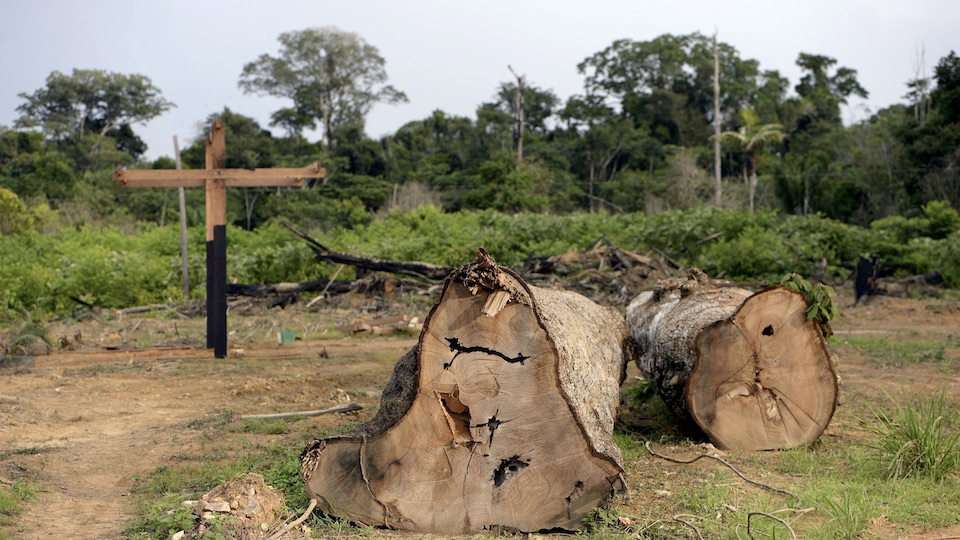 Illegally felled trees in the Amazon rainforest in Brazil